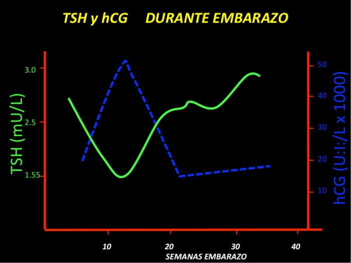 FIGURA 1. El aumento en gonadotrofina coriónica (hCG, en azul), con niveles crecientes en primer trimestre de embarazo, estimula tiroides y se produce más T4 y T3, lo que se traduce en niveles disminuidos de TSH.